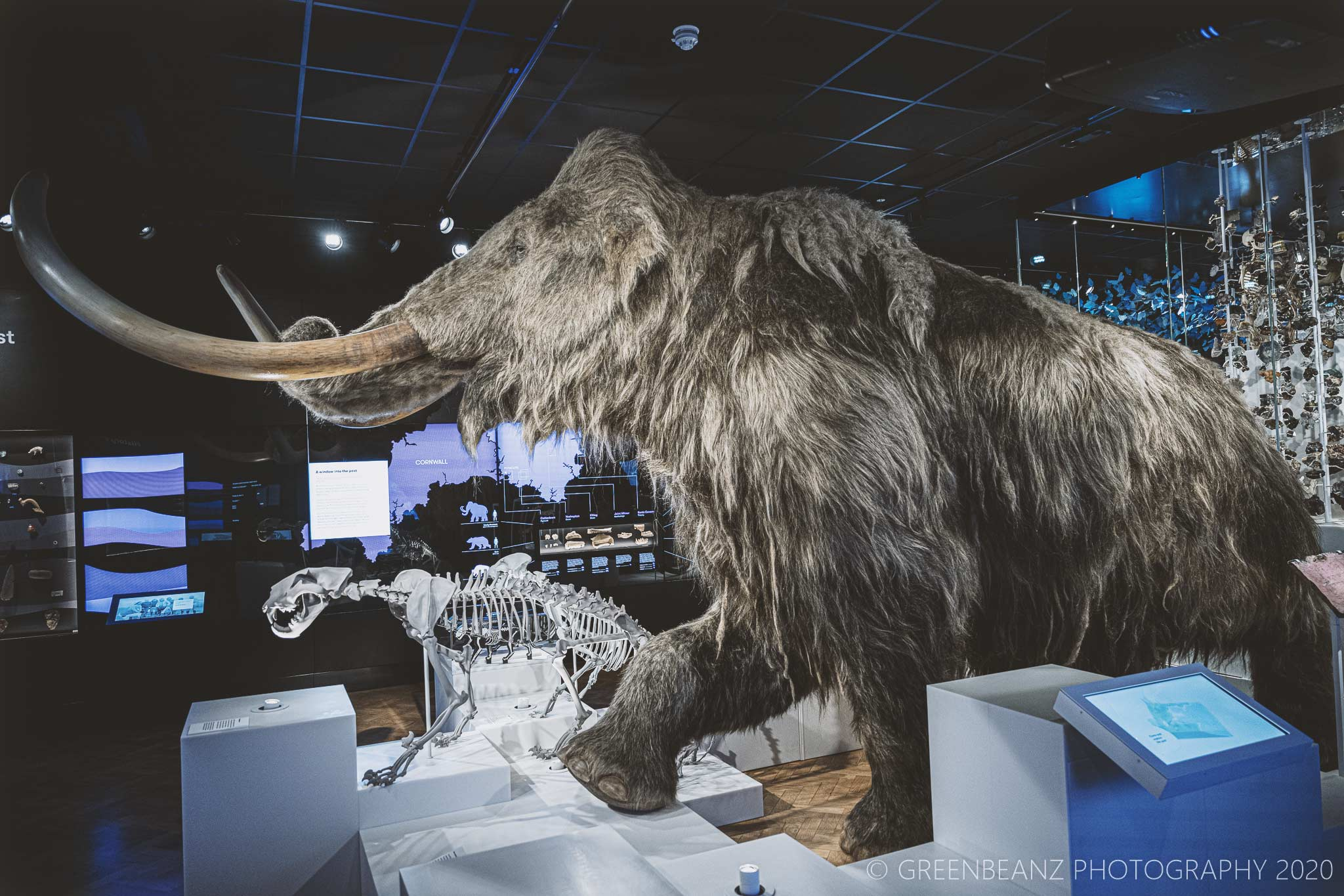 Woolly Mammoth at Plymouth's The Box Musem